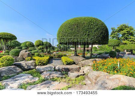 Beautiful dwarf tree in the garden in Thailand