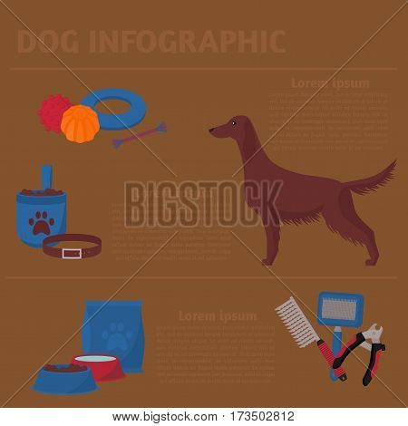 Dog infographic design elements, Irish setter in flat style. Grooming, walking, veterinary, training and feeding items