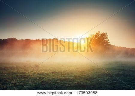 Fantastic foggy river with fresh green grass in the sunlight. Dramatic and gorgeous scene. Location place Seret river, Ternopil. Ukraine, Europe. Discover the world of beauty. Vintage soft filter.
