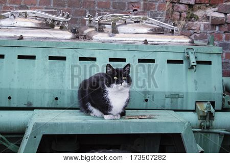 Outdoor kitchen. Cart with field kitchen for the soldiers. Cat waiting for food