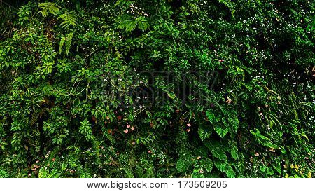 green tropical decorate plant garden fresh nature background in sunshine