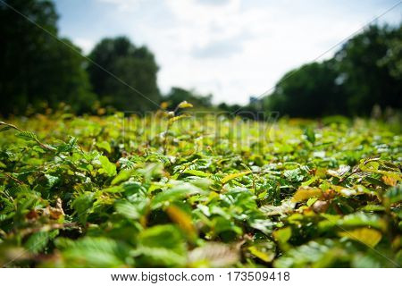 Green bush with green leaves. Closeup view background