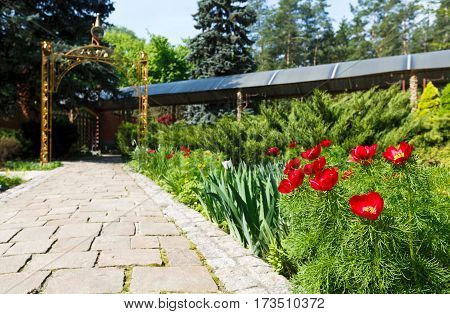 Red tulips near garden tile path lead to gazebo arch in summer park. Landscape design of garden. Flowerbed and evergreen bushes.