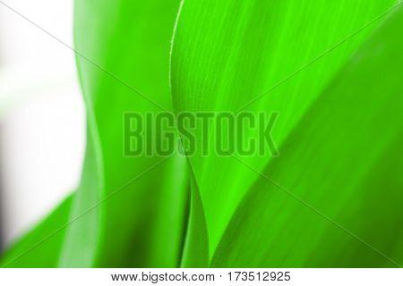 green leaf close-up, close-up shot of beautiful curves plants
