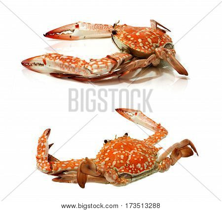 Steamed crabs 2 view on white background and for your presentation in menu or advertisement.