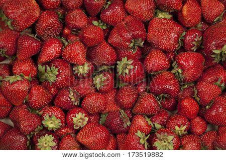 Red, ripe, sweet, fragrant strawberries. Summer Fruits.