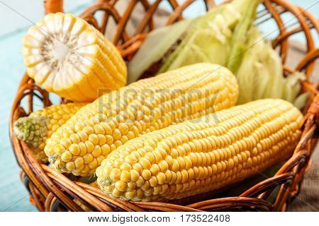 Basket of fresh sweetcorn husked. Top view