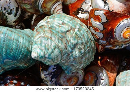 Colourful seashells on the quayside Heraklion Crete Greece Europe.