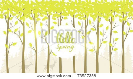 Beautiful and stylish background with forest tall trees and place for text. Vector illustration