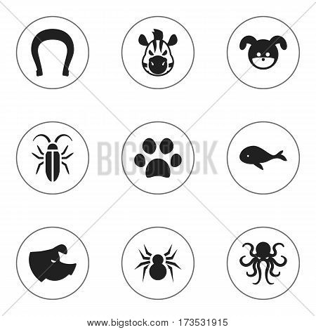 Set Of 9 Editable Zoo Icons. Includes Symbols Such As Ocean Blower, Horse, Arachind And More. Can Be Used For Web, Mobile, UI And Infographic Design.