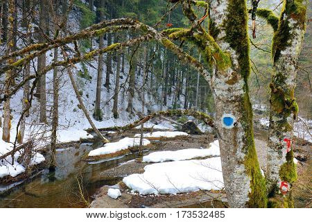 Winter landscape in the Occidental Carpathians, Romania, Europe