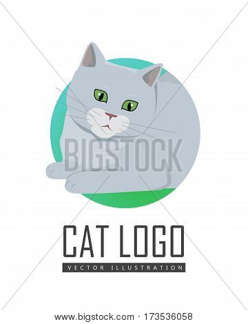 Cute grey cat playing with toy flat vector illustration isolated on white background. Purebred pet. Domestic friend and companion animal. For pet shop ad, hobby concept, breeding