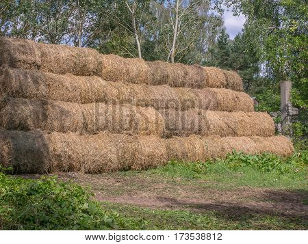 Big Bales Of Straw