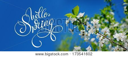 Beautiful blooming spring garden on a background of blue sky and text Hello Spring. Calligraphy lettering.