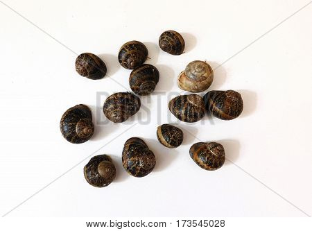 snails on white background in the kitchen