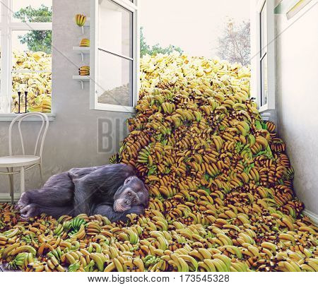 The room, full of bananas and the monkey. 3d creative concept