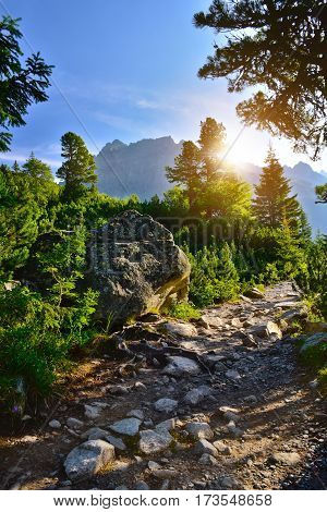 Stone path in the forest. Tatra mountain sunrise