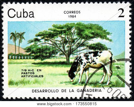 UKRAINE - CIRCA 2017: A stamp printed in Cuba shows a Cow grazing in the meadow Pastos artificiales the series Livestock Development circa 1984