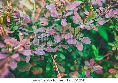 Spring Background With Garden Plants