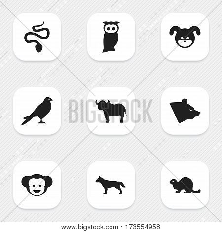 Set Of 9 Editable Zoo Icons. Includes Symbols Such As Owl, Puppy, Baboon And More. Can Be Used For Web, Mobile, UI And Infographic Design.