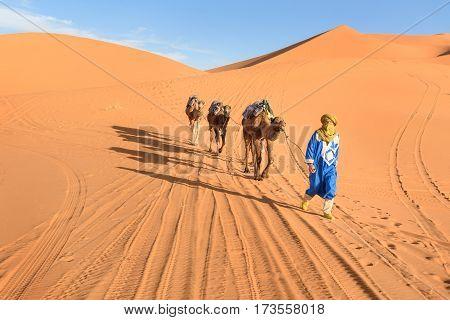 Merzouga Morocco - Jan 6 2017: Berber man leading camel caravan in Erg Chebbi Sand dunes in Sahara Desert