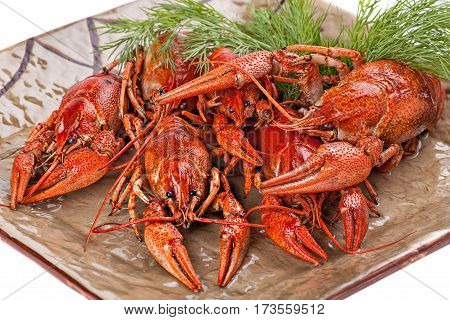 Boiled crayfish with dill on the plate. Close up.