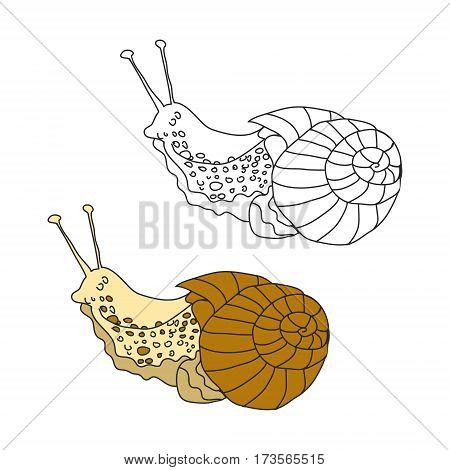 A slug or snail on white background abstract, vector illustration