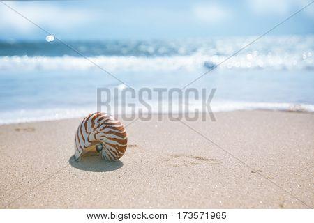 seashell nautilus on sea beach under sunset sun light, Agadir, Morocco