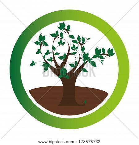 colorful circular emblem with leafy tree plant vector illustration