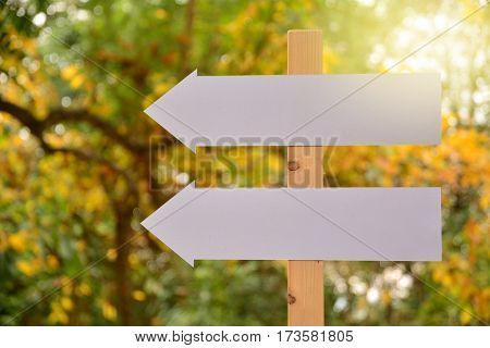 White blank signs pointing in same directions nature back ground