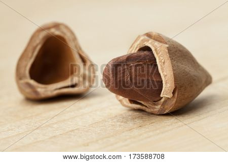 One single Pili nut from the Philippines in a broken shell
