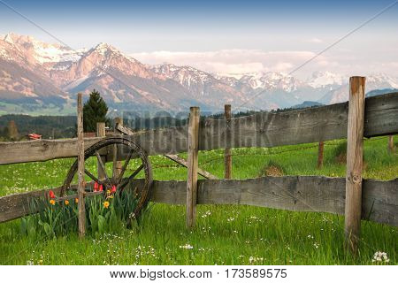 Beautiful setting of flowers, cartwheel and a wooden fence. during sunset in the mountain. Alps, Bavaria, Germany.