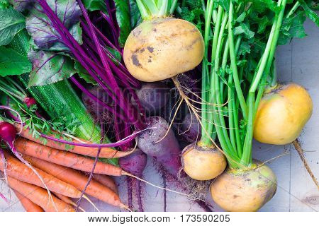 Freshly harvested organic unwashed root vegetables, top view