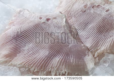 Fresh raw skate fish wings on ice close up,