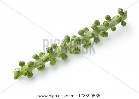Stalk with fresh Brussels sprouts on white background