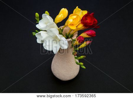 lowers of freesia white, yellow and red in a small vase on a black background, top view, like a postcard