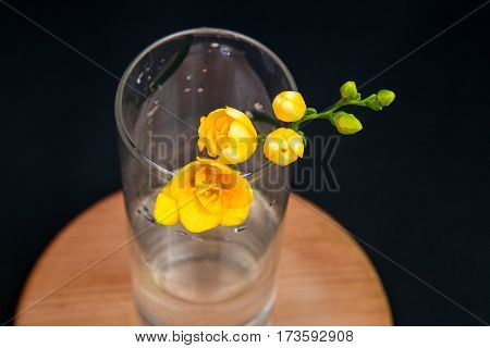 flowers yellow freesia in a glass vase on a simple black background wooden stand, top view