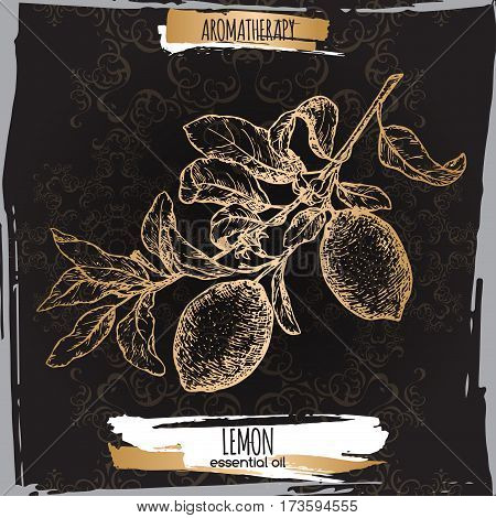 Citrus limon aka lemon branch sketch on elegant black lace background. Aromatherapy series. Great for traditional medicine, perfume design, cooking or gardening.