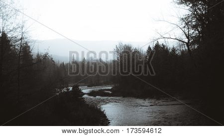 Black and white image of a forest river on an overcast day.