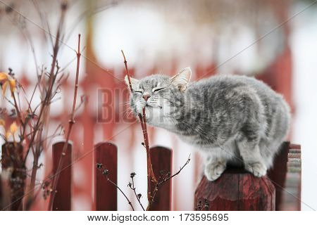 sweet tabby cat fondled on a branch in spring on a fence