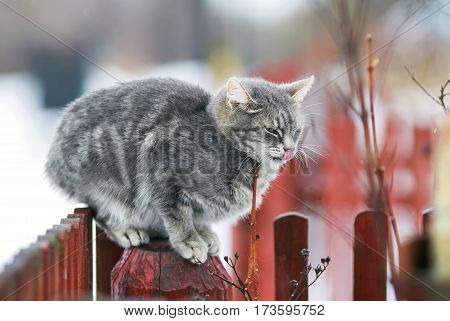 pet cat sit on the fence in the spring