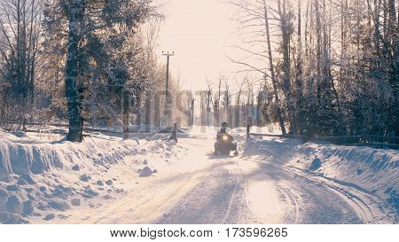 Winter forest in a hoarfrost. Snowfall 4K