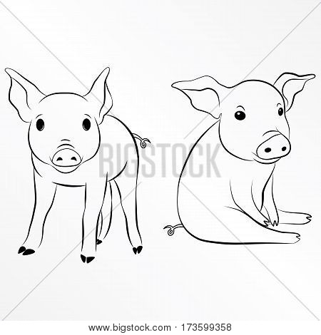 Pig, Piglet, Piggy, Swine, Hog. Eps 10 vector illustration