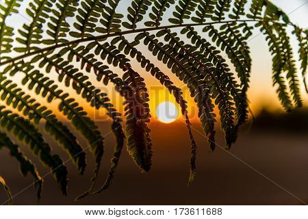 Fern leaf at sunset a small depth of field