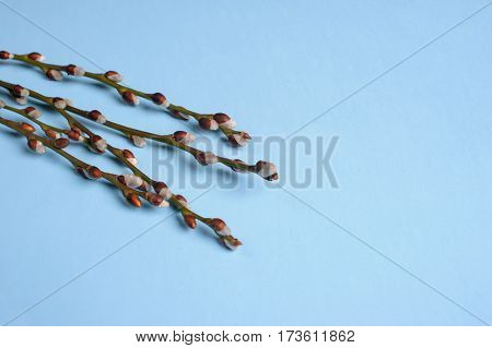 willow seals placed on the blue background
