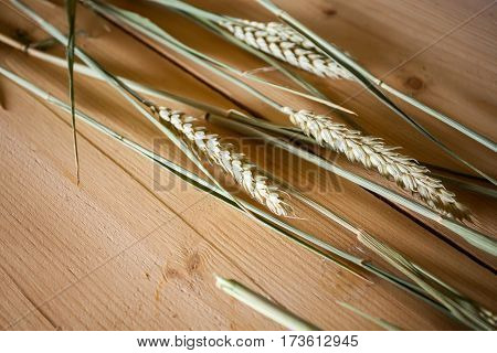 ripe ears of wheat on wooden table surface