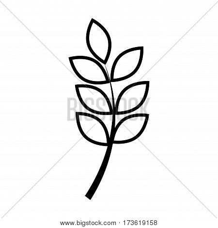 silhouette leaf with ramifications plant vector illustration