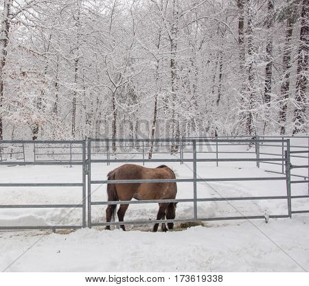 Brown horse in a white snowy forest