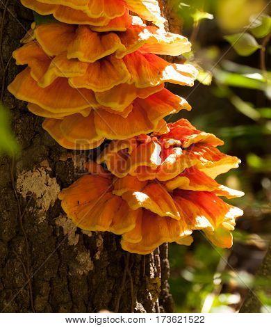 Bright orange mushroom on tree with sunshine on side