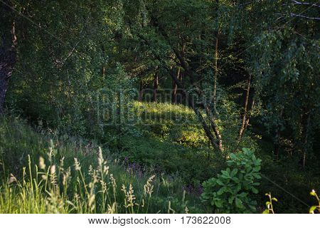 Nice view of the ravine. Summer green background. Landscape
